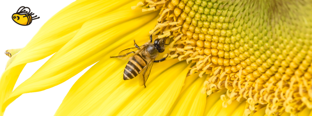 The Behavior Exchange Busy Bees